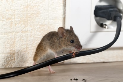 Pest Control in Notting Hill, W11. Call Now! 020 8166 9746