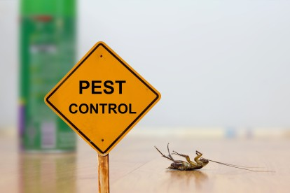 Pest Contol in Notting Hill, W11. Call Now 020 8166 9746