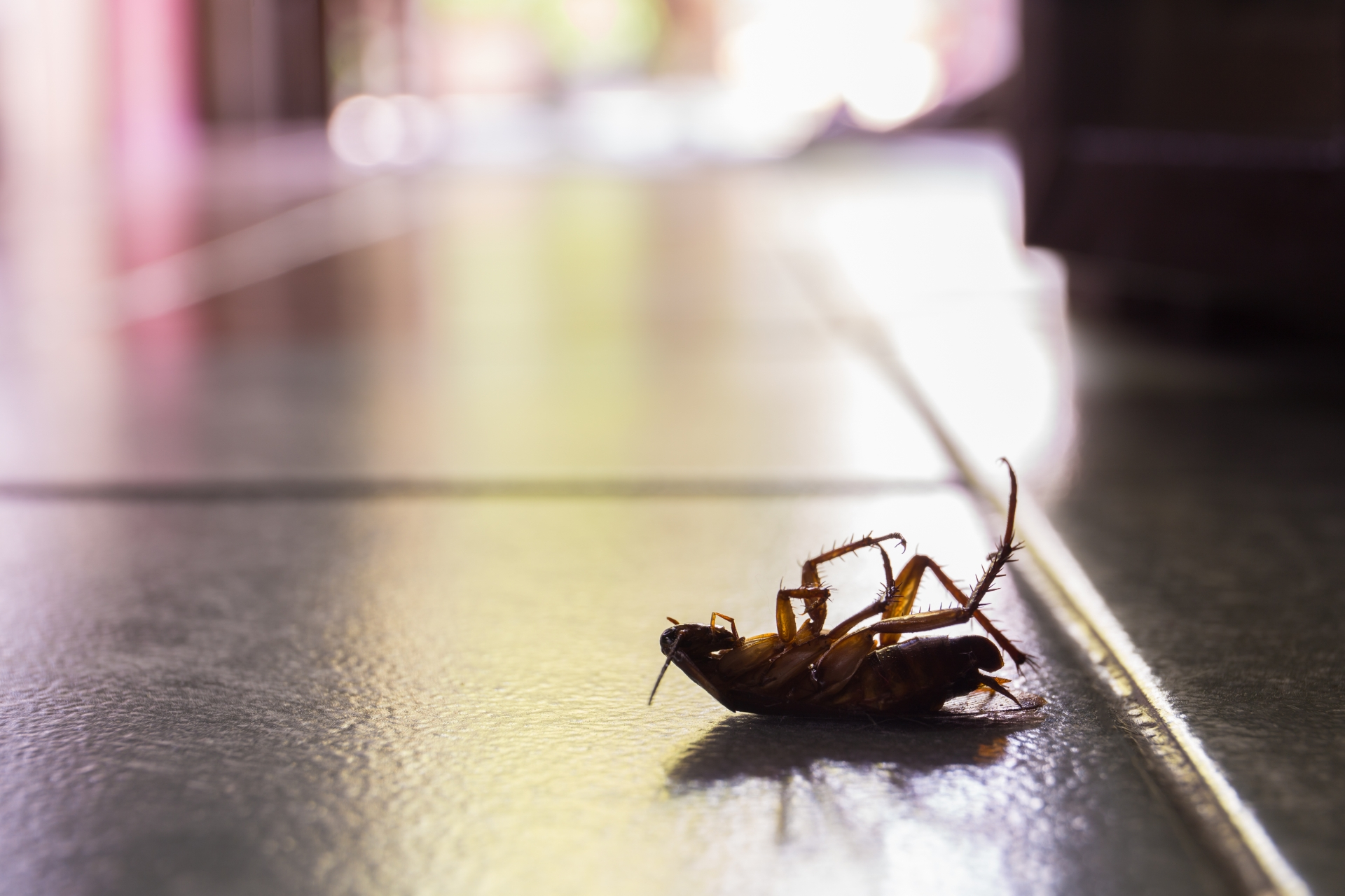Cockroach Control, Pest Control in Notting Hill, W11. Call Now 020 8166 9746